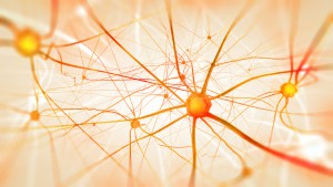 Neurons in the brain on light background